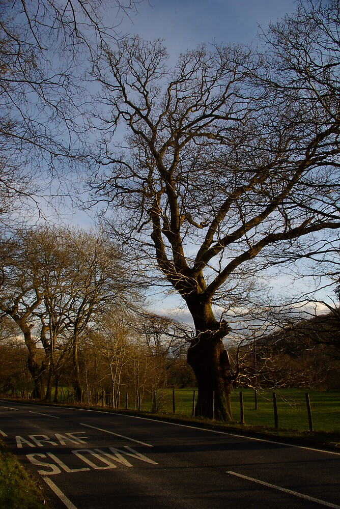 Welsh Roads by helenhelen