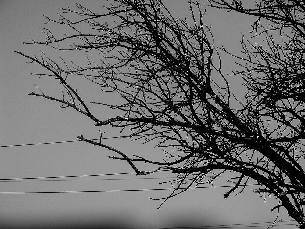 haunting tree by keara