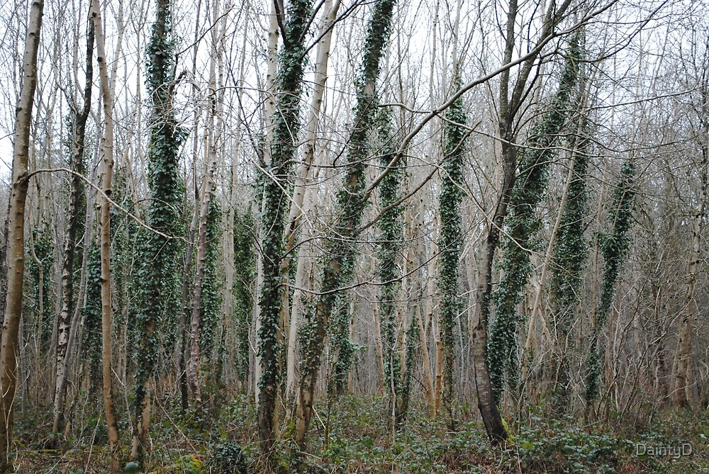Woods I by DaintyD