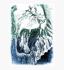 Triumphant Judah Blue Green Photographic Print