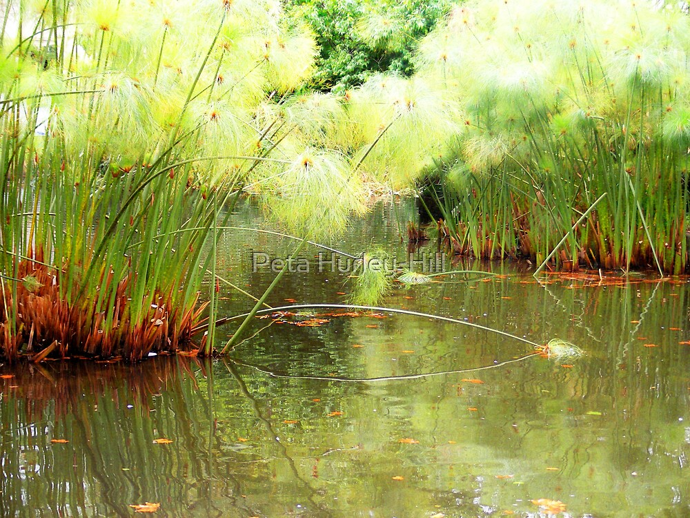 pond by Peta Hurley-Hill