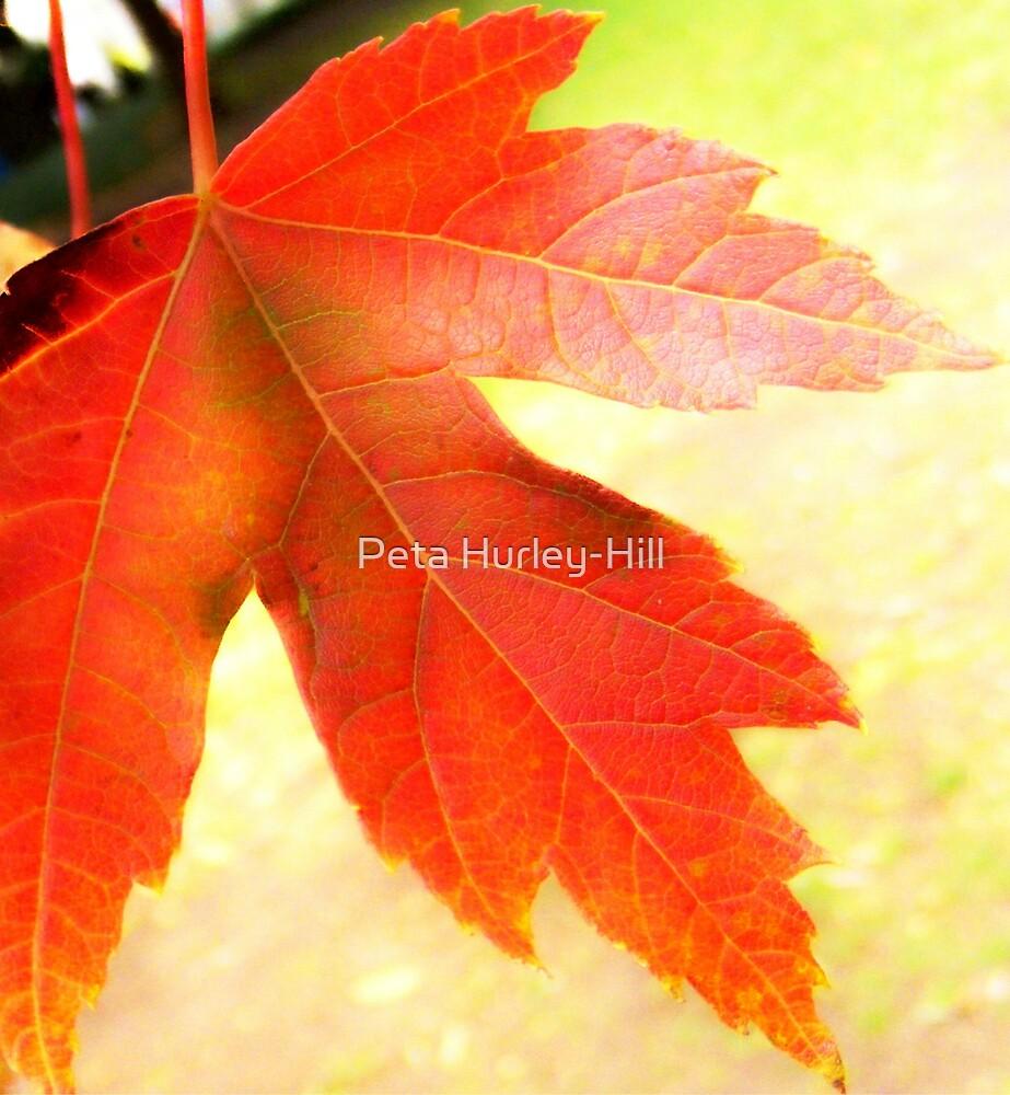 leaf by Peta Hurley-Hill