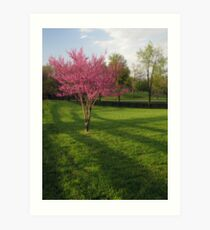 Flame of Spring Art Print