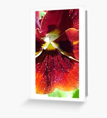 Russet pansy macro Greeting Card