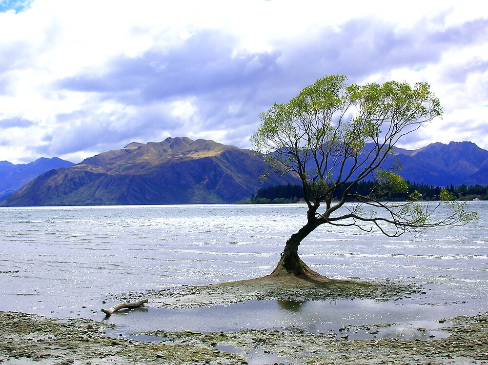 tree lake wanaka by AliceFrench7