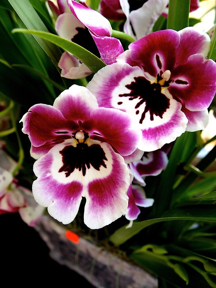 Orchids by Douglas E.  Welch