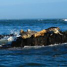 seals by AliceFrench7
