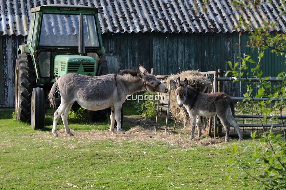 Donkey family by cuprum