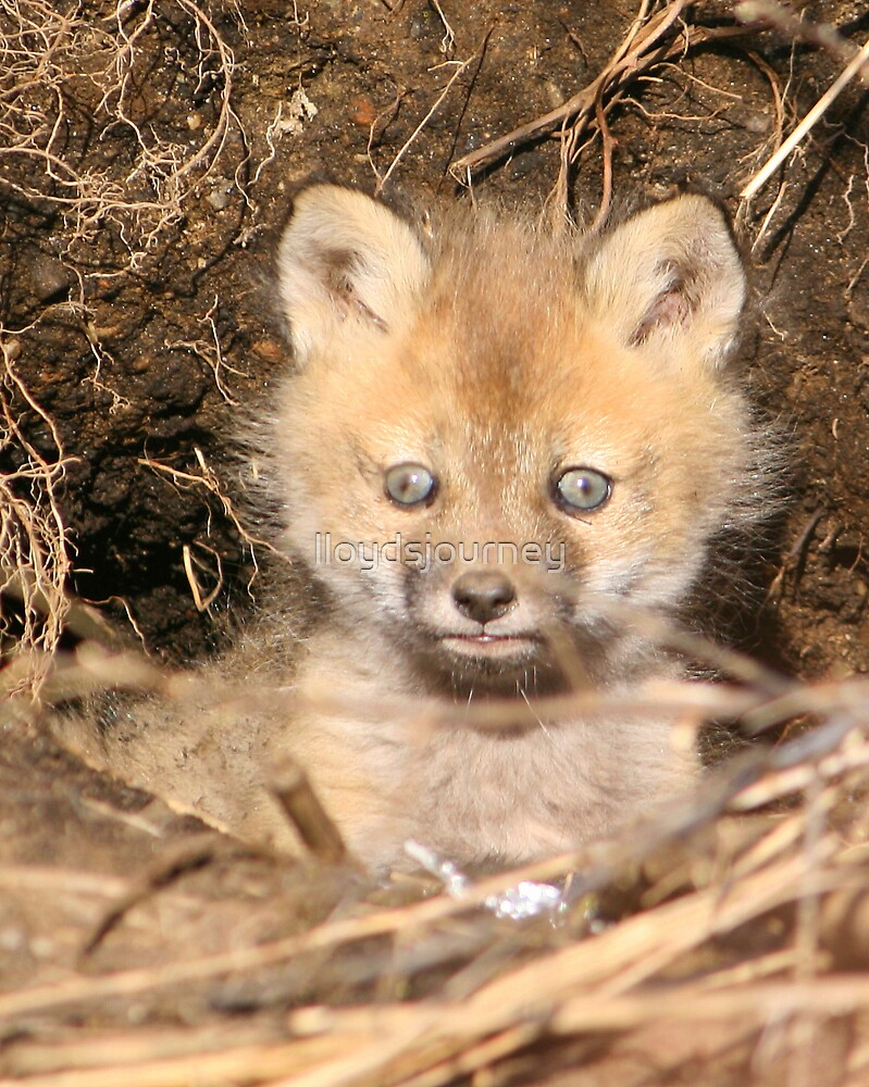 How cute am I? by lloydsjourney