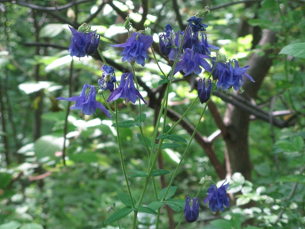 Purple Dainty Flowers by PhotogOnTheFly