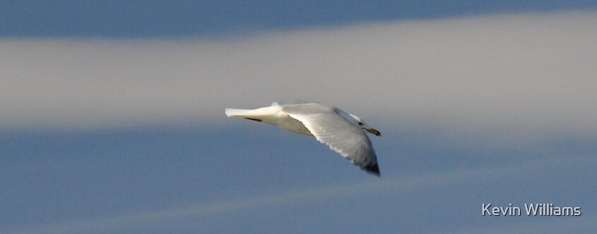 bird in flight by Kevin Williams
