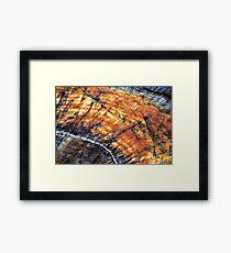 Tree Stump Arc  Framed Print