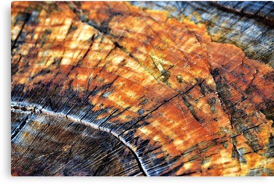 Tree Stump Arc  by Katherine Friesen