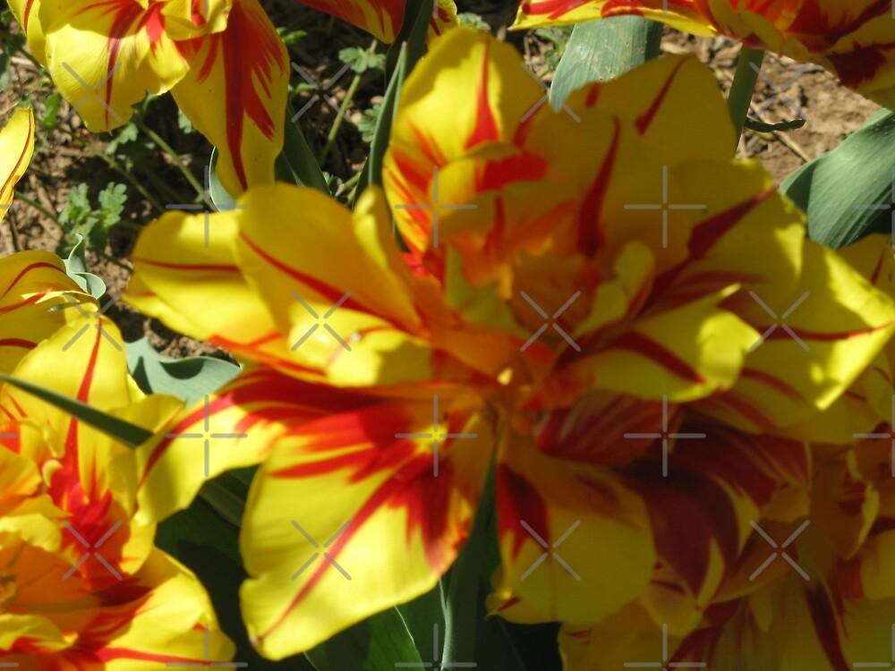 Yellow And Orange Brilliance by PhotogOnTheFly