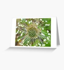 Clover, wild, overgrown, amazing Greeting Card