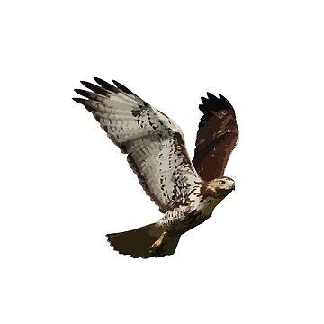 Hawk by Nathansart