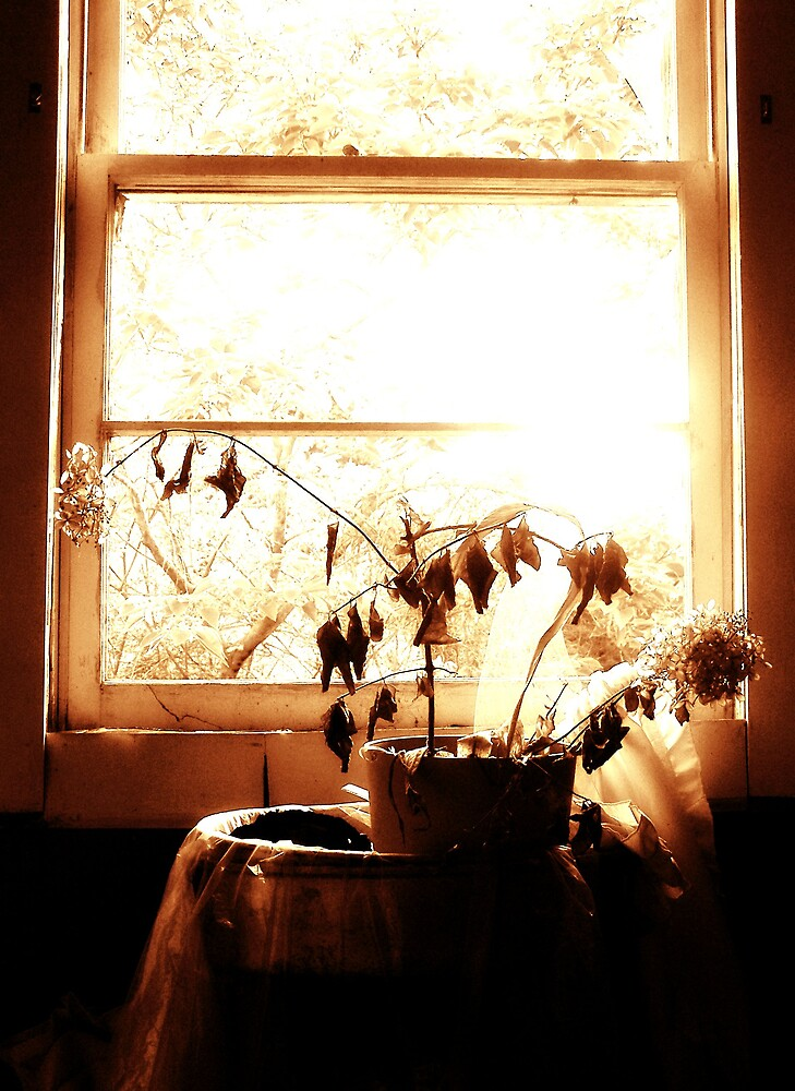 Tinted Window by Kristie King