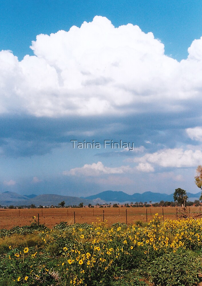 Sunflower Alley by Tainia Finlay