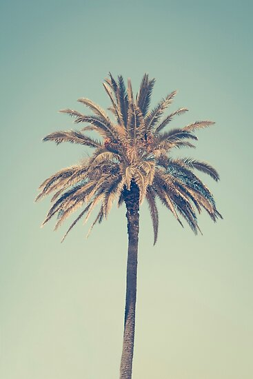 Retro palm tree by Marie Carr