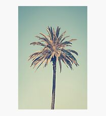Retro palm tree Photographic Print