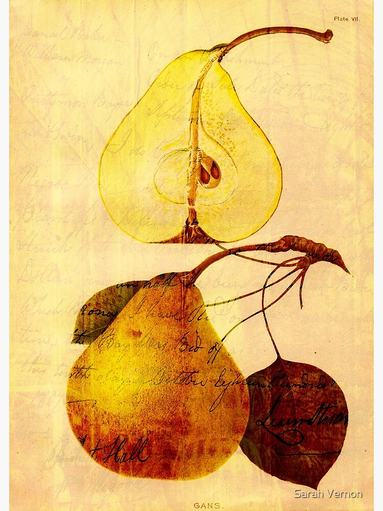 Copper Pear by tillymagoo