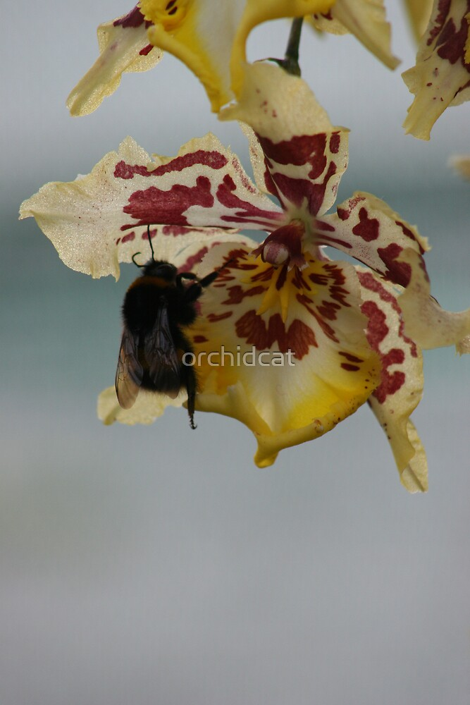 Busy bee  by orchidcat
