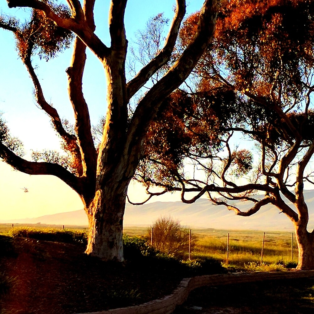 Gnarly Trees Oceanside California by theveiledattic