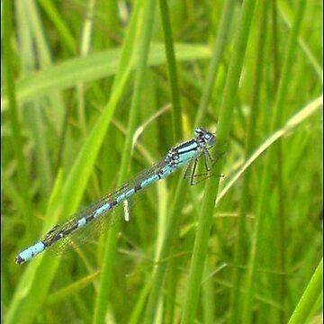 Dragonfly by kelman
