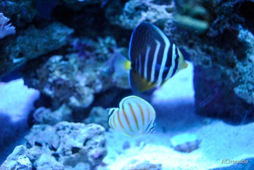 Aquarium Views 2 by ACIronside