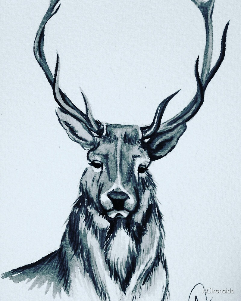Deer  by ACIronside
