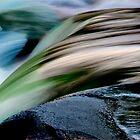 Water Colors by Angelika  Vogel