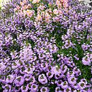 Field of Flowers by AmyAutumn