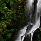 Nelson Falls Tasmania by Angelika  Vogel