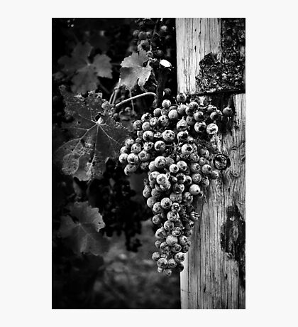 The fruit of the vine Photographic Print