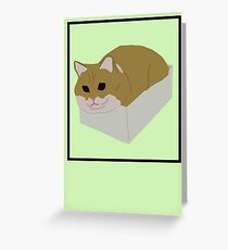 Fat Cat In Box Greeting Card