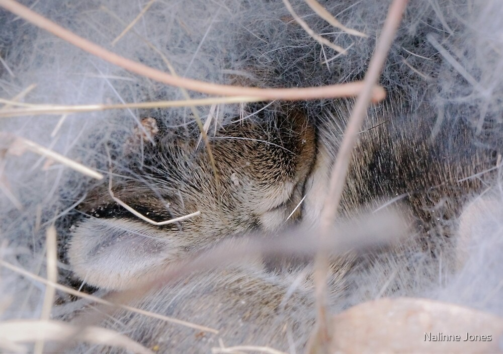 Baby Bunny Snuggled in its Nest by Nalinne Jones
