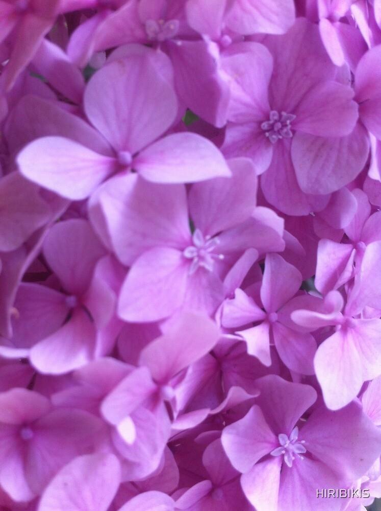 Flower by HIRIBIKIS