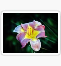 Lavender And Yellow Lily Sticker