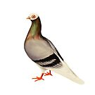 Le Pigeon by heatherlandis