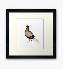 Le Pigeon Framed Print