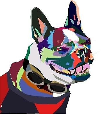 Boston Terrier by sarah032