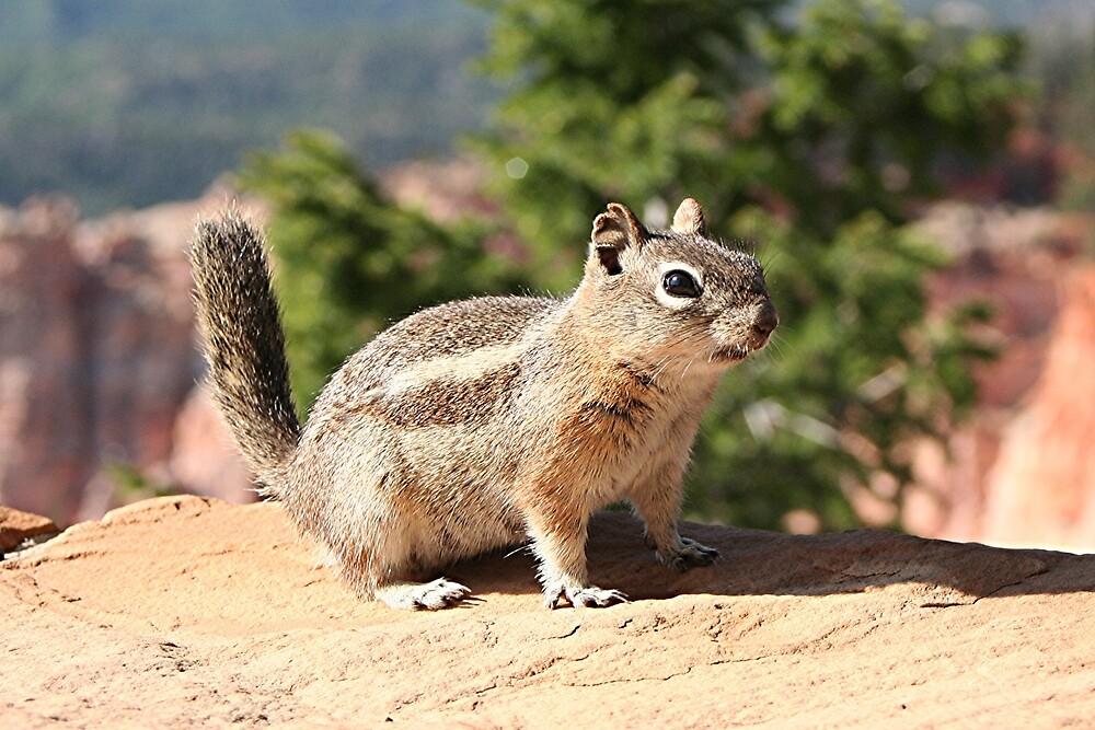 Chipmunk at Bryce Canyon, Utah by FranWest