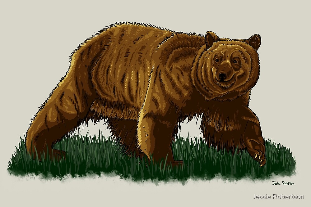 Grizzly Bear Graphic Illustration by Jessie Robertson