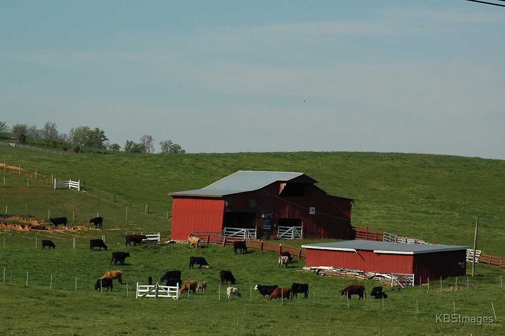 Cattle Farm by KBSImages