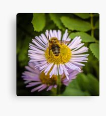 Successful Bee is Successful Canvas Print