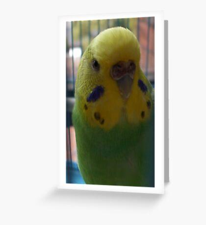 Pretty Birdy Greeting Card