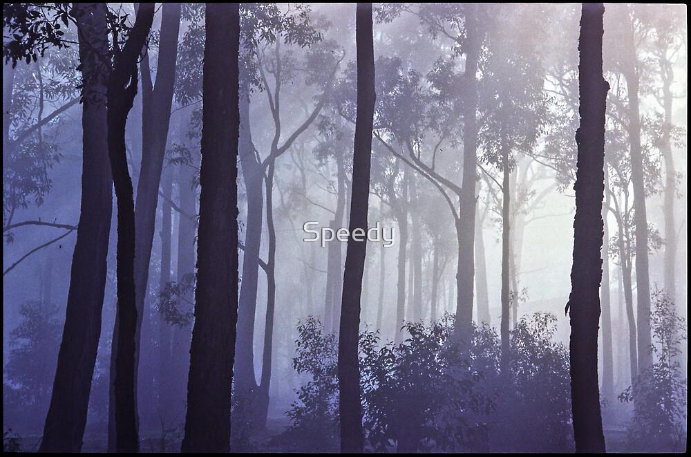 Misty Forest by Speedy