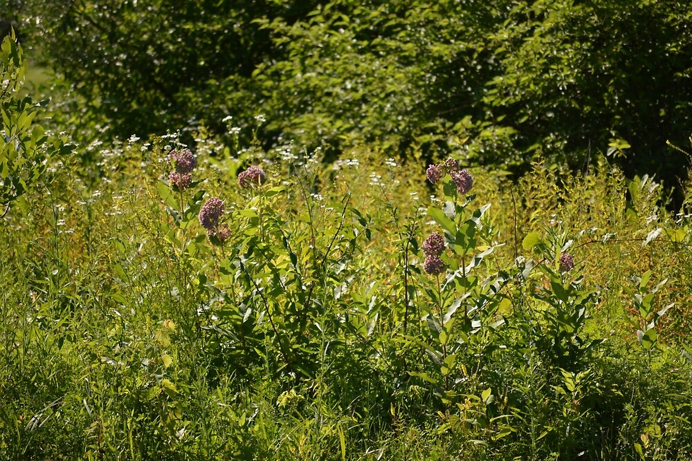 The Meadow at Milkweed Island by Michelle Cole