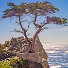 Lone Cypress - Pebble Beach - California - USA by TonyCrehan