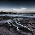 Driftwood by Ryan Piercey
